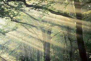 Bosque de Broceliande